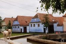 Uliță idilică în Viscri/Deutsch-Weisskirch, satul care pe 2013 a anunțat de 30 de ori mai mulți turiști decât numărul de locuitori. De când Prințul Charles a cumpărat o proprietate în sat și organizația pe care o patronează, Mihai Eminescu Trust, se ocupă de conservarea patrimoniului local, satul a devenit un magnet pentru turiști, caz impresionant pentru peisajul românesc.